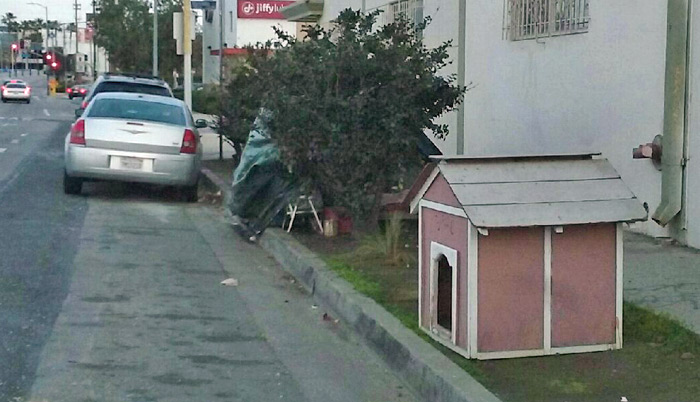 Dog House in parkway
