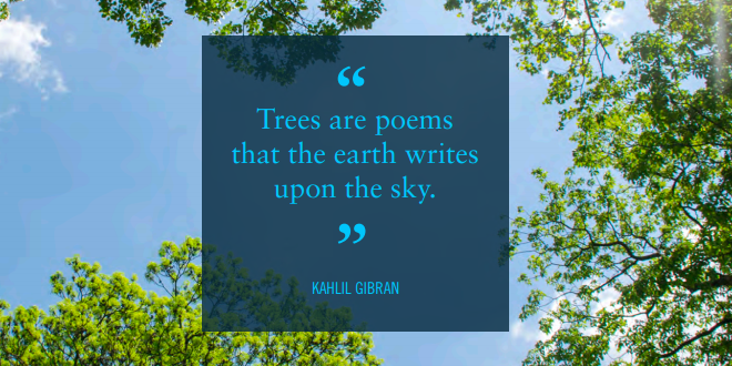 Trees are poems that the earth writes upon the sky: Kahlil Gibran